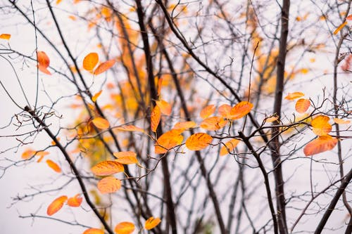 Бесплатное стоковое фото с осенние цвета