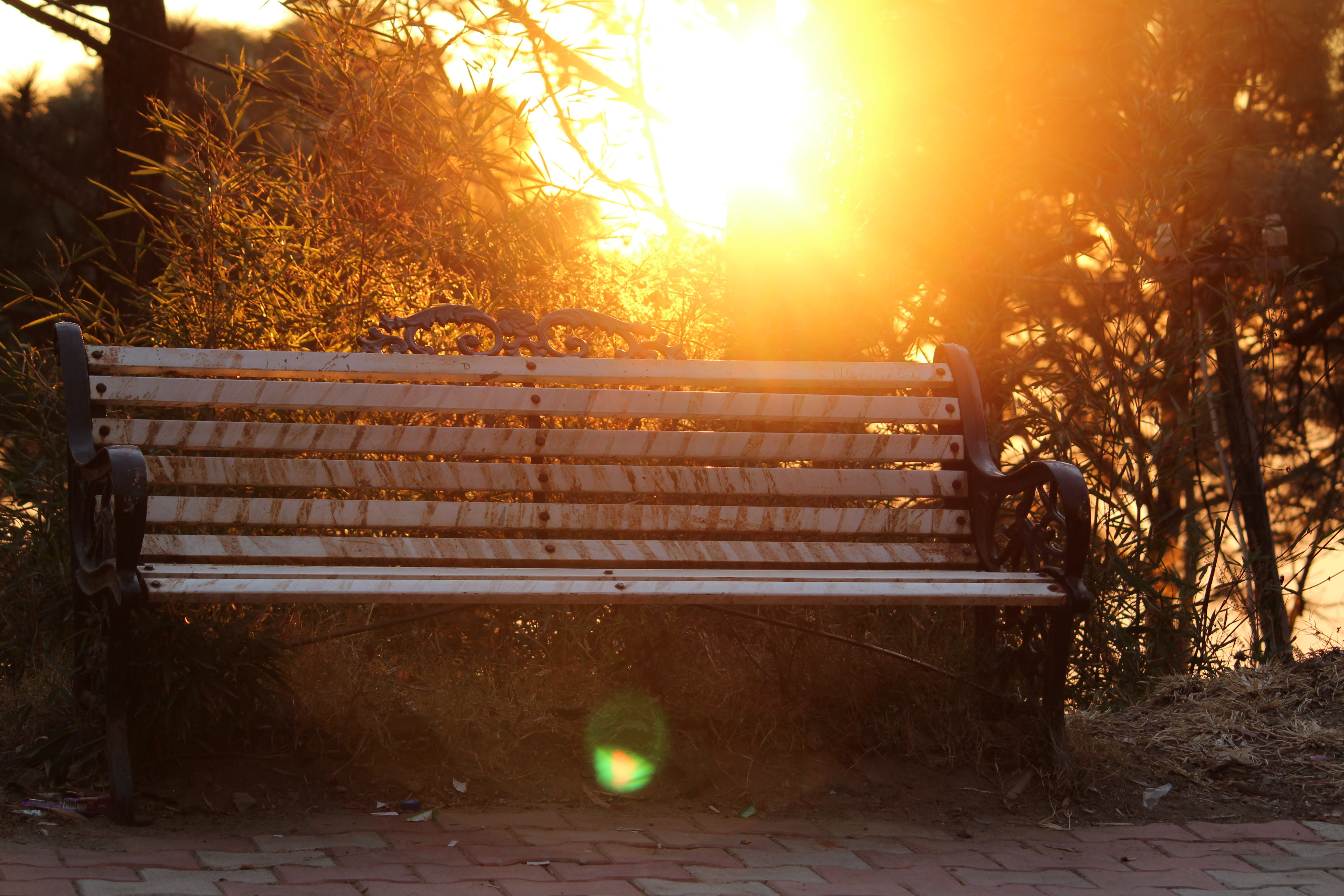 Brown Metal-framed Bench Surrounded by Trees