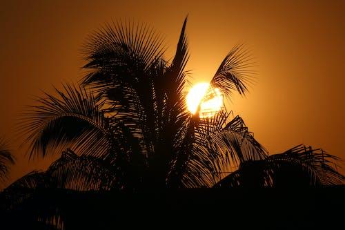 Безкоштовне стокове фото на тему «вечір, Захід сонця, кокос»