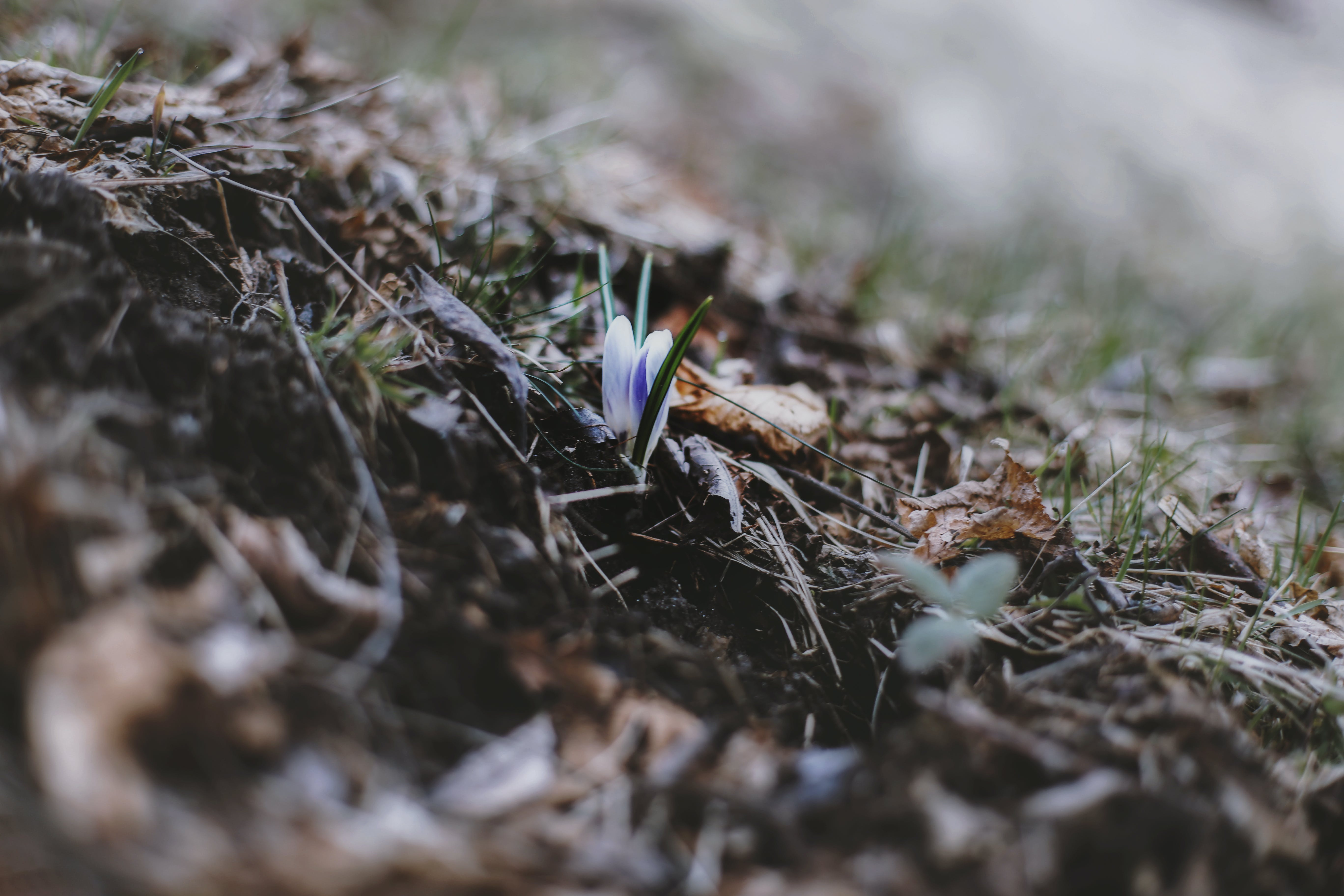 bitki örtüsü, bulanıklık, çekilmiş, çevre içeren Ücretsiz stok fotoğraf