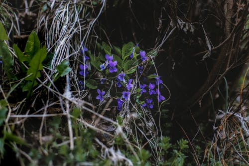 Photo of Purple Flowers Near Leaves