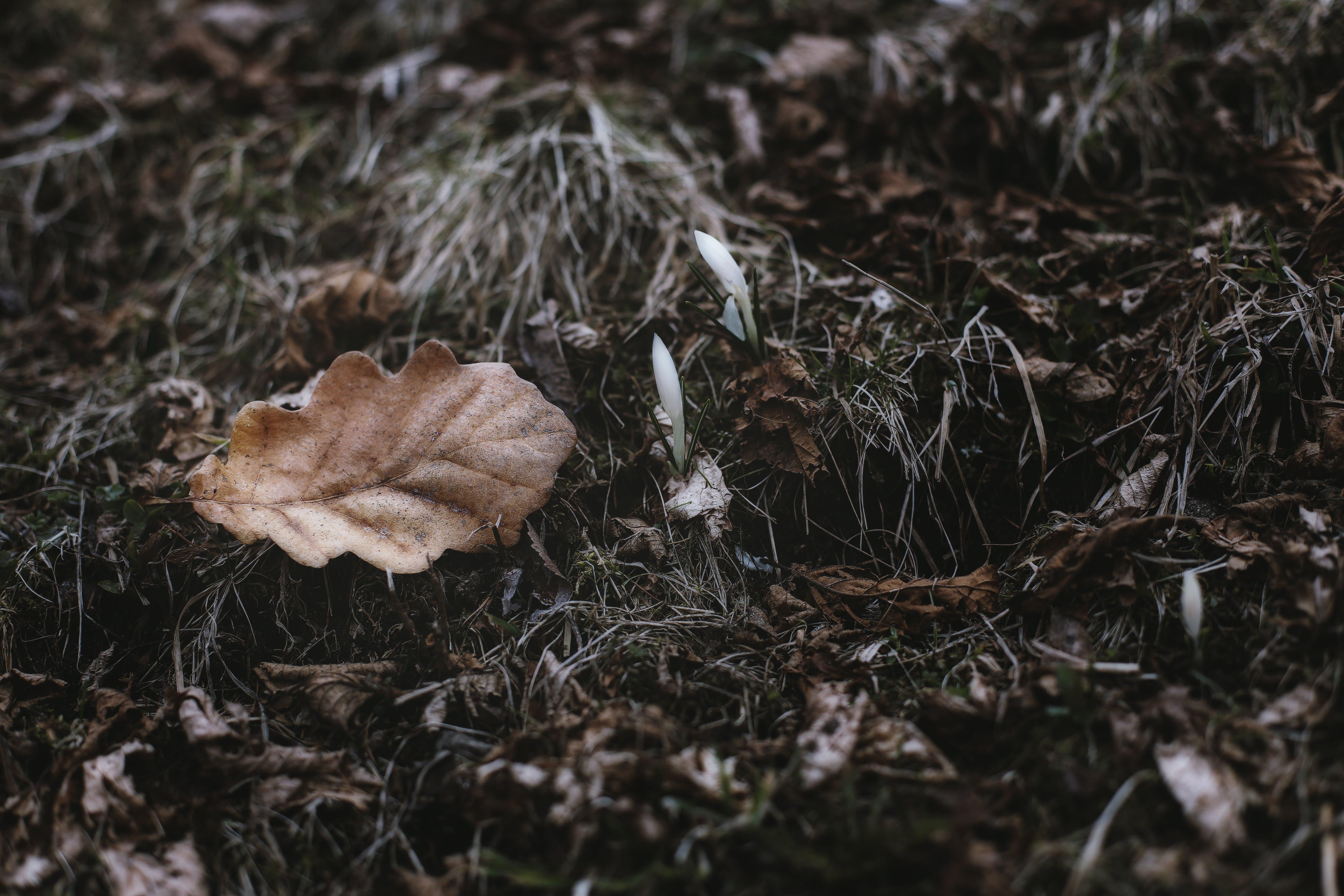 Kostenloses Stock Foto zu getrocknete blätter, jahreszeit, nahansicht, natur