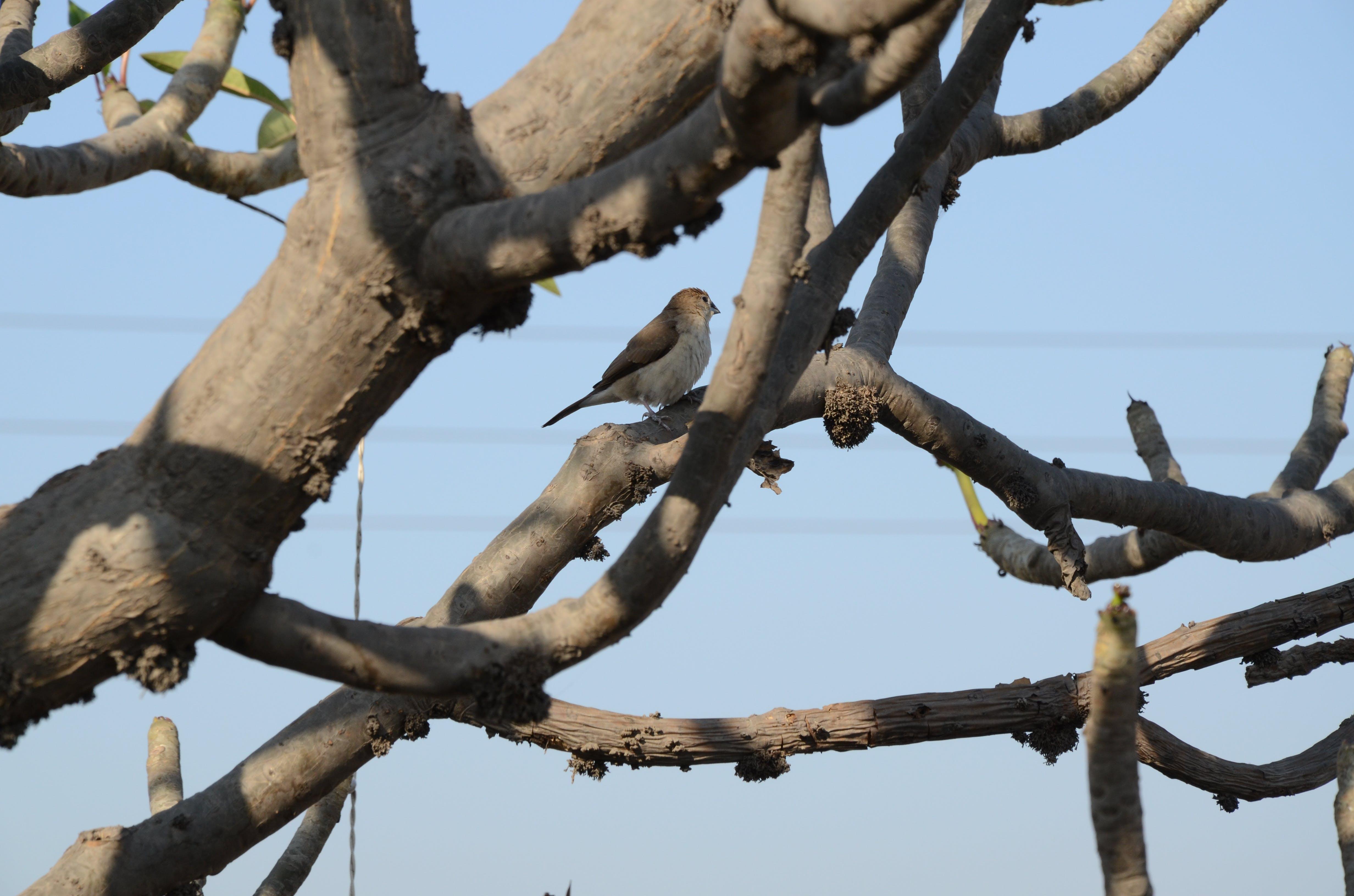 Brown Bird on Tree Branch