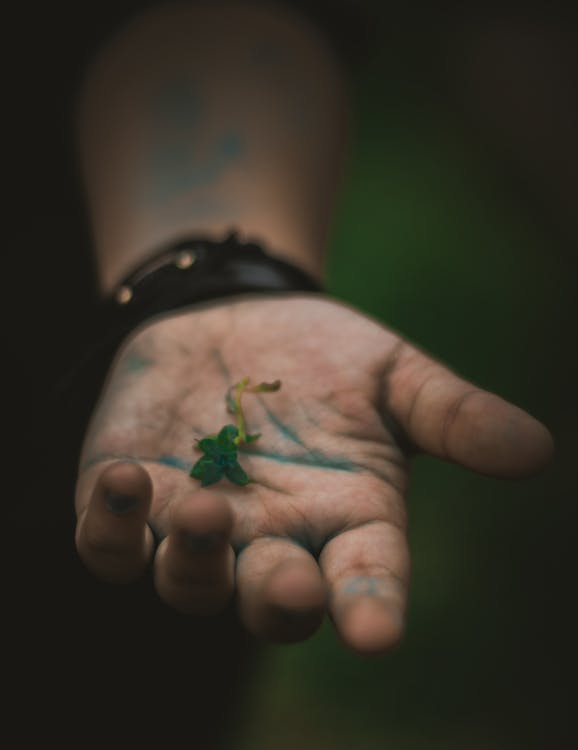esvaeix, flors boniques, fosc
