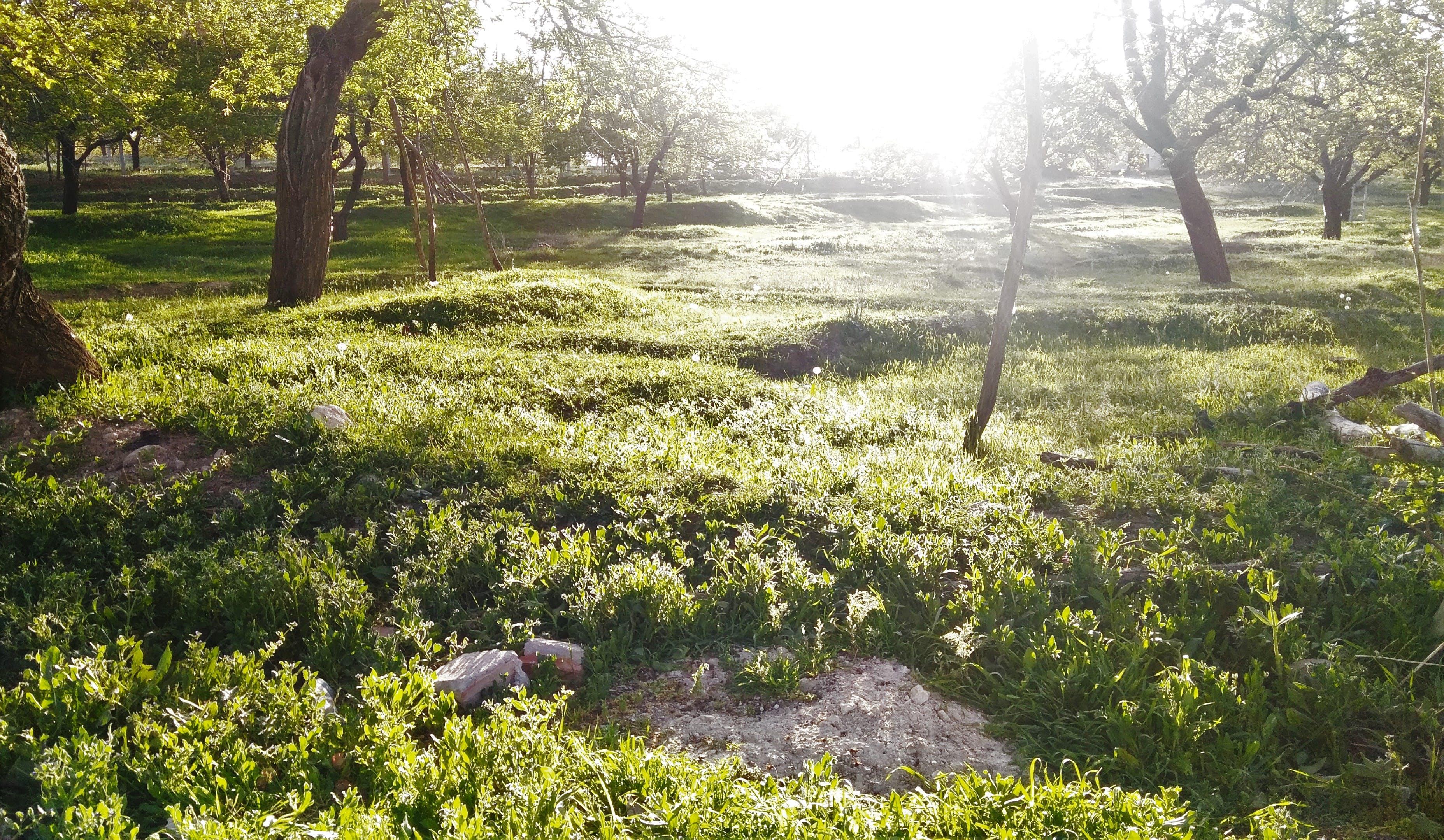 Kostenloses Stock Foto zu bäume, garten, gras, hell