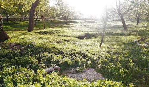 Základová fotografie zdarma na téma denní světlo, jasný, krajina, léto