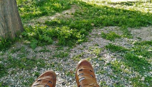 Безкоштовне стокове фото на тему «взуття, газон, Денне світло, зелений»