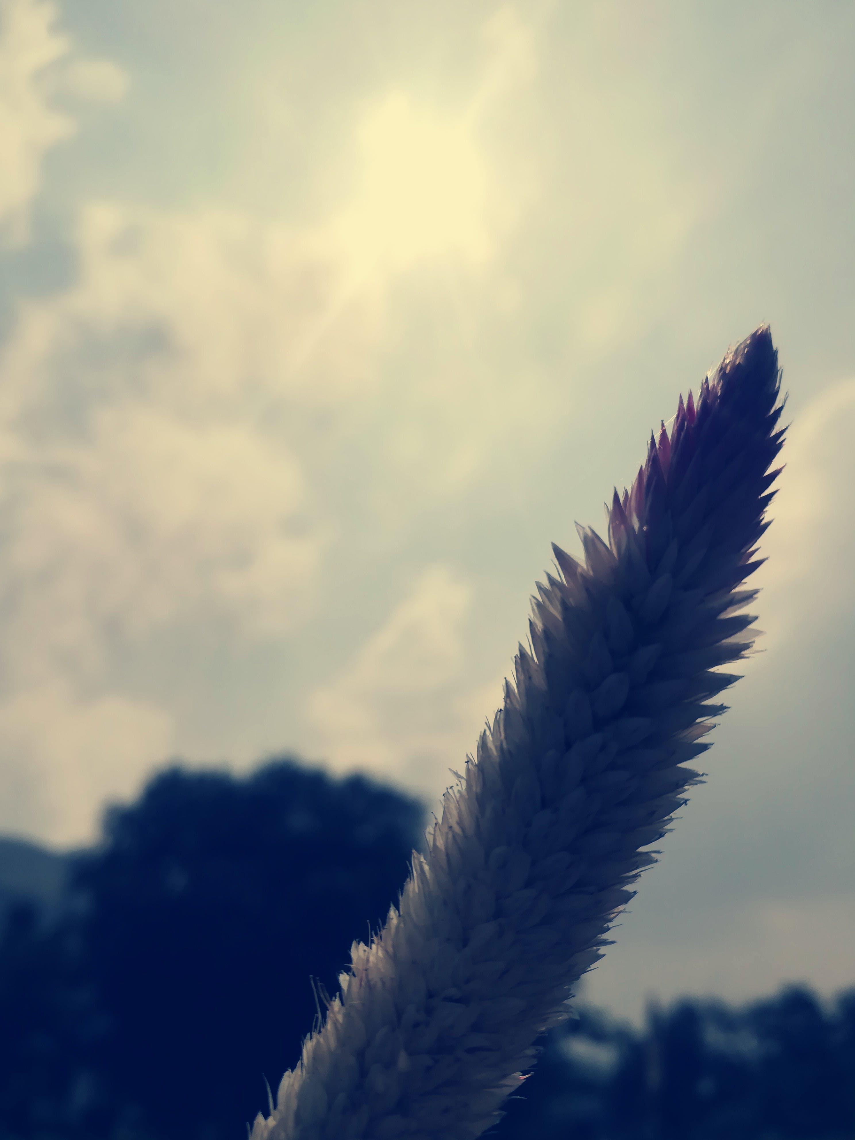 Free stock photo of white background, beautiful flower