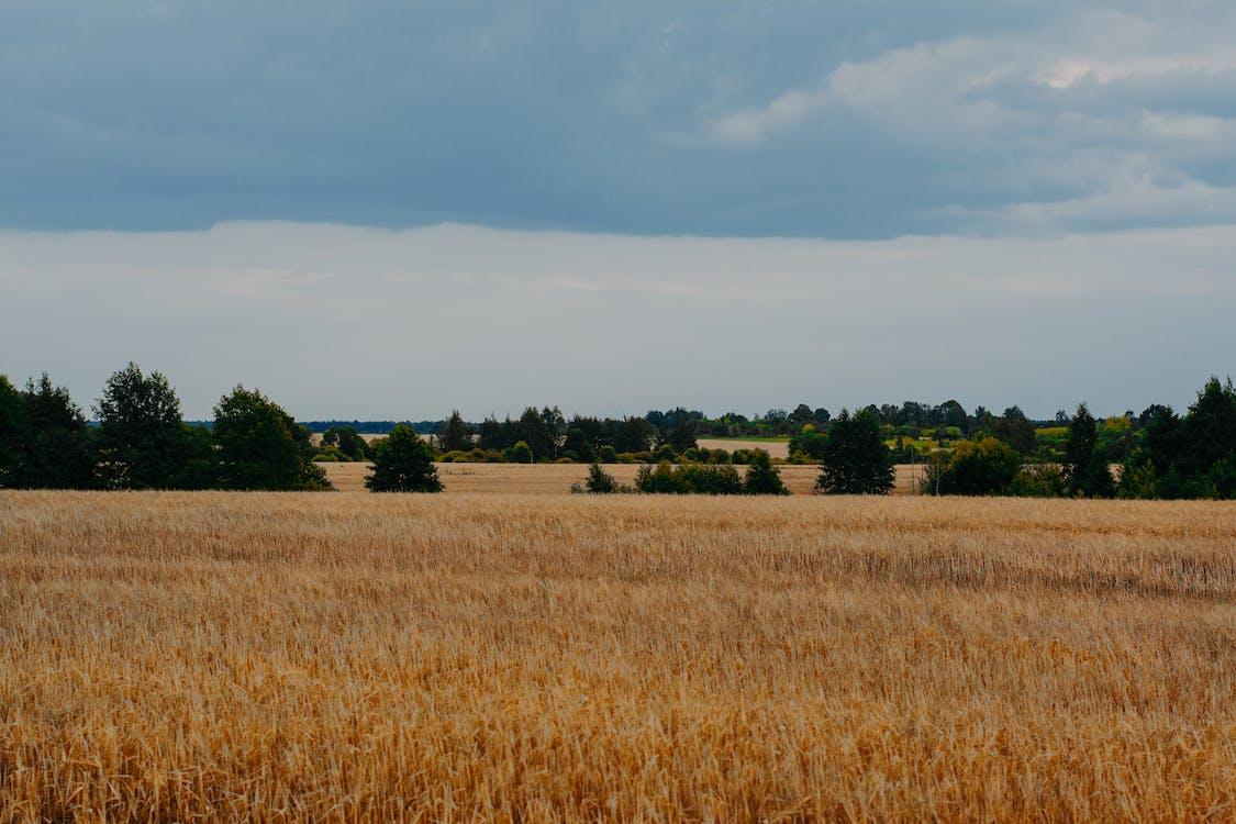 αγρόκτημα, γεωργία, γήπεδο