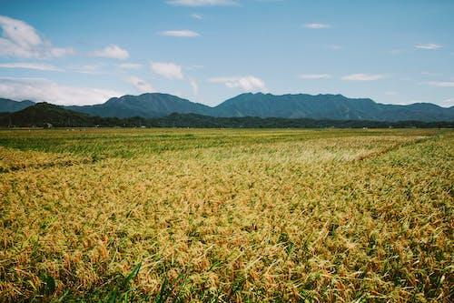 Foto profissional grátis de agricultura, ao ar livre, área, áreas