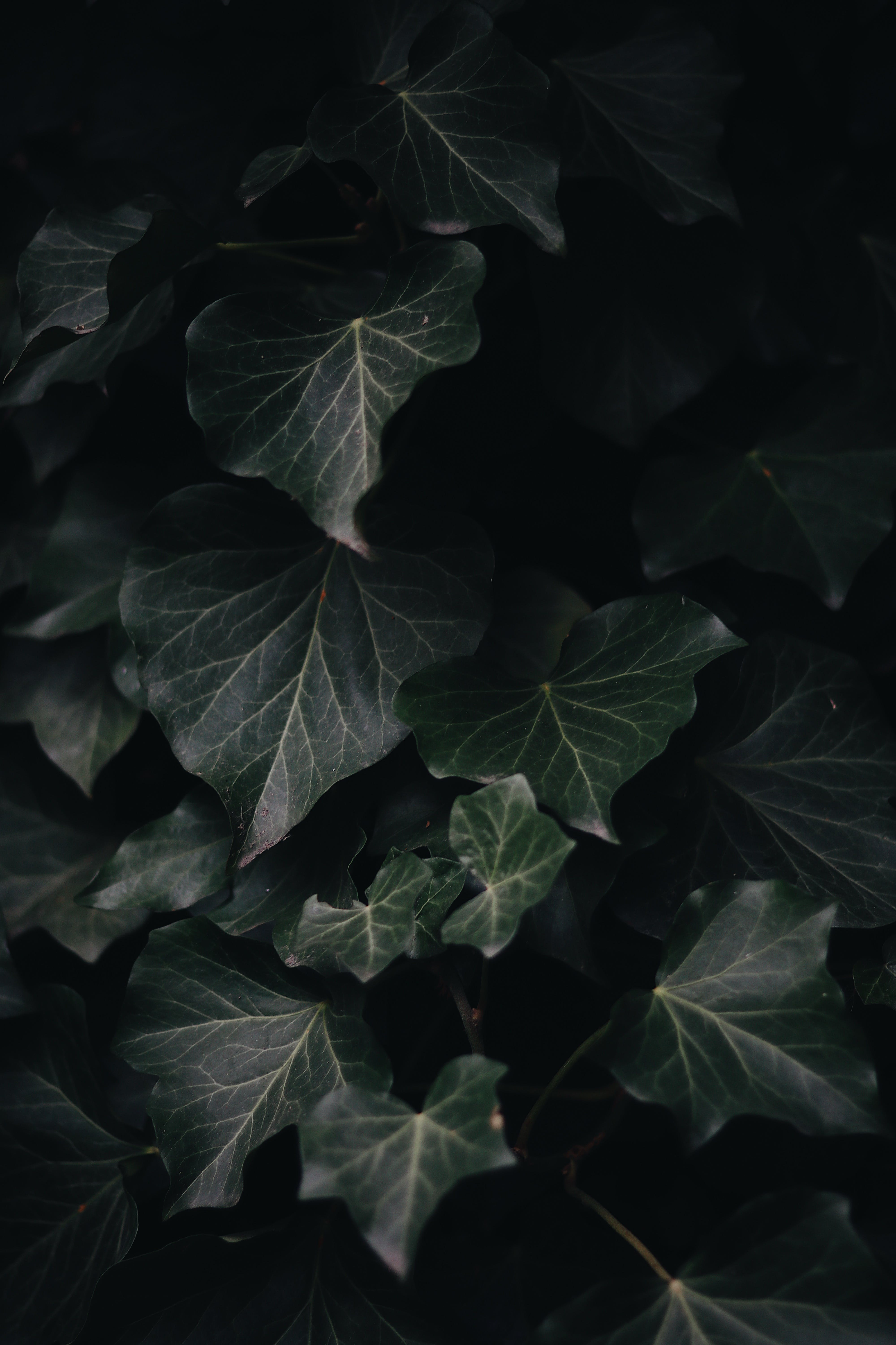 Photography of Green-Leaf Plants
