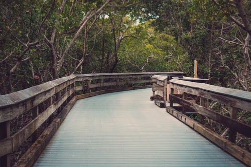 Photography of Wooden Bridge Near Trees