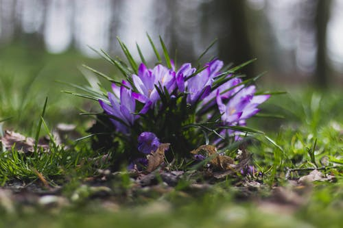 Selective Focus Photography of Purple Flowers Near Grass