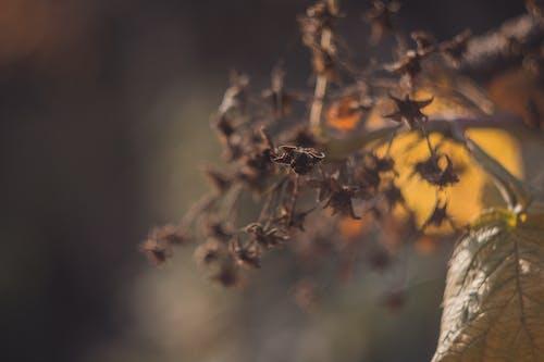Бесплатное стоковое фото с дерево, размытый