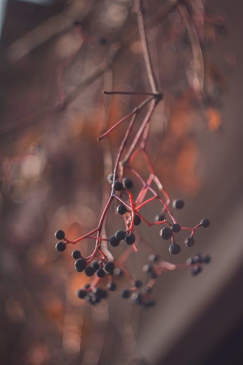 Бесплатное стоковое фото с фрукты, ягода