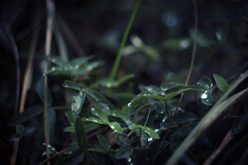 Selective Focus Photography of Wet Leaves