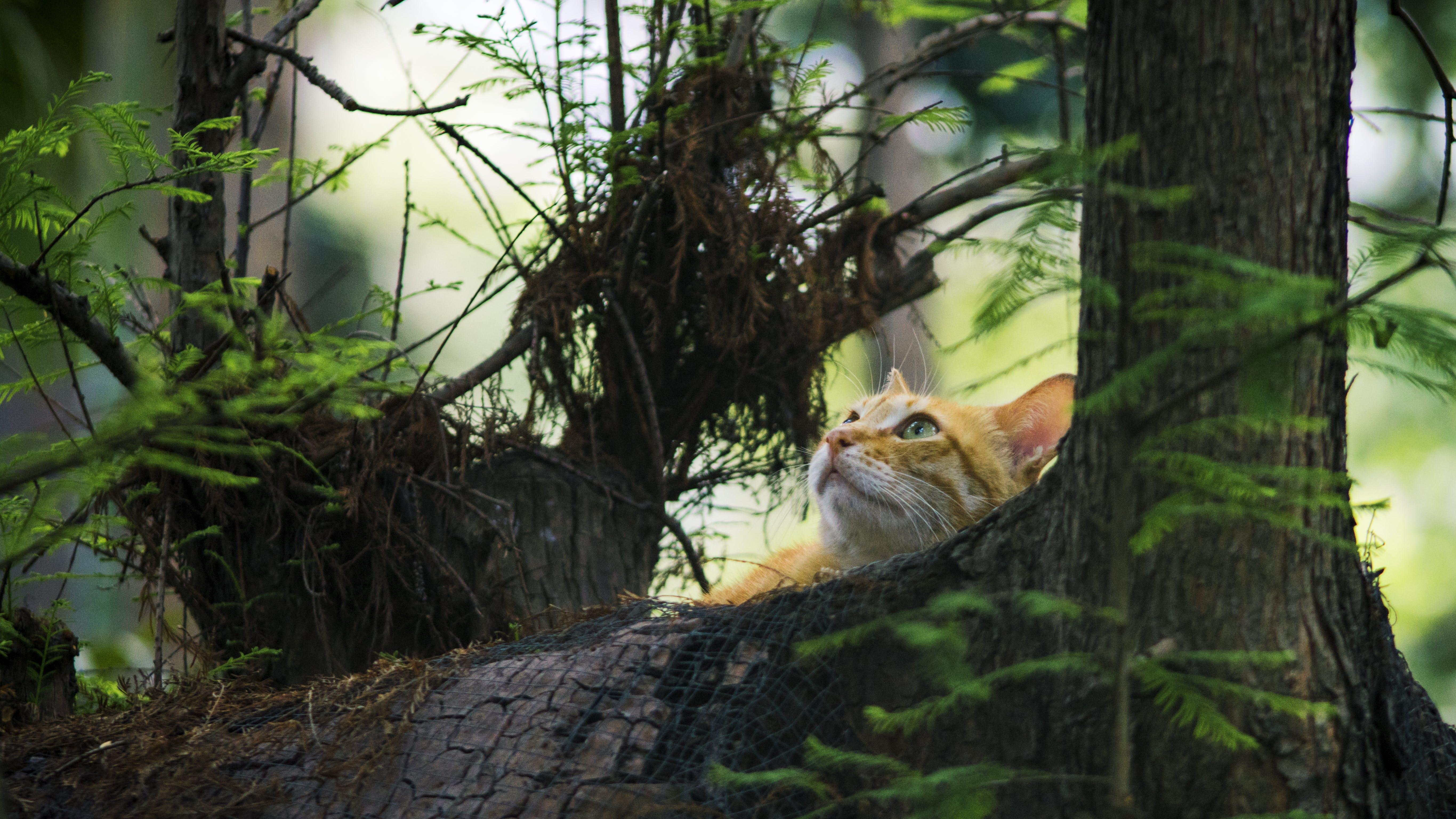 Yellow Kitten on Brown Trees