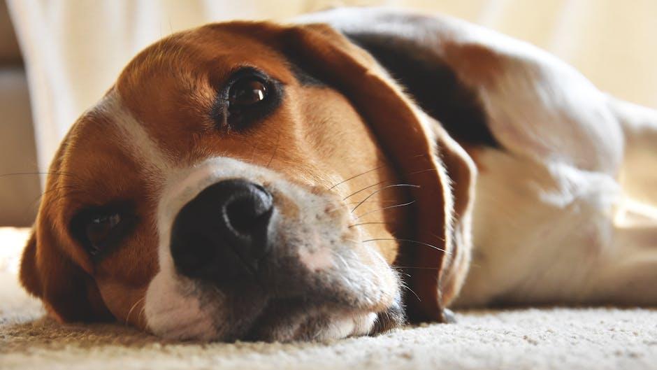 Close-Up Photography of Beagle