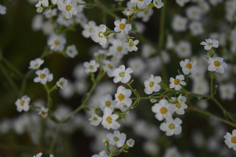 Základová fotografie zdarma na téma bokeh květiny, květiny, kytka