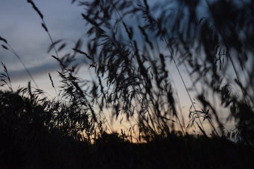 花草甸, 草原, 草地, 草甸日落 的 免費圖庫相片