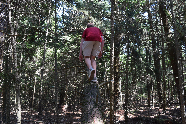 Základová fotografie zdarma na téma horolezecký strom, lezení po stromech, strom