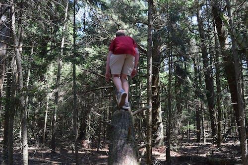 Photos gratuites de arbre, arbre grimpant, grimper dans les arbres