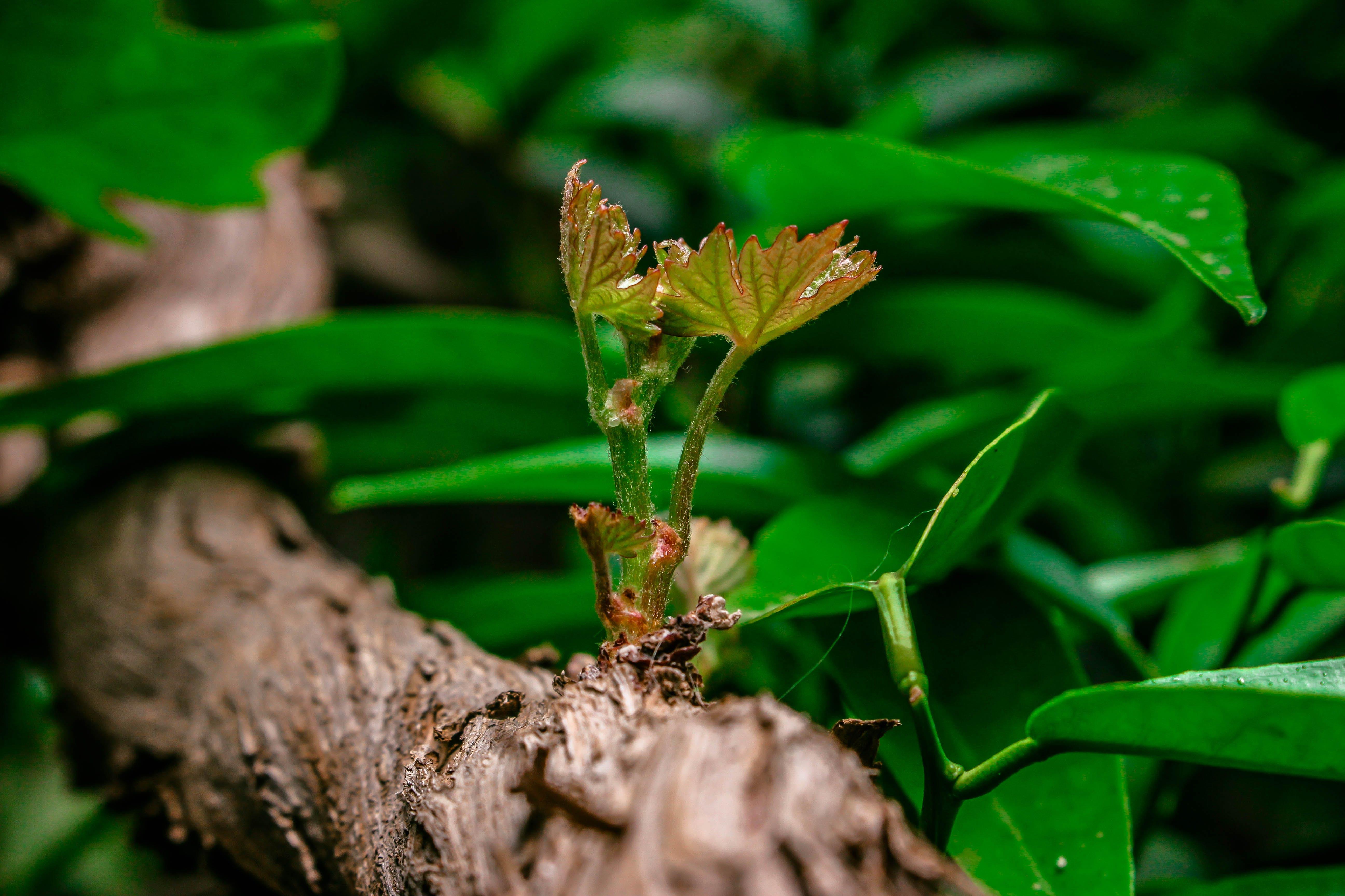 Free stock photo of garden, grape, green, life