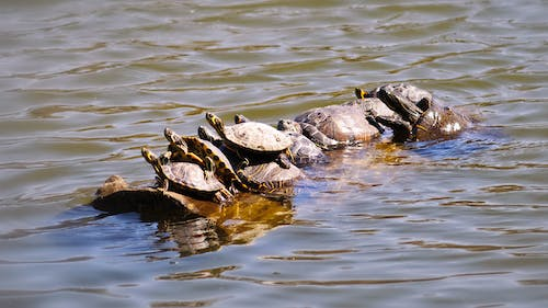 Photo of Group of Turtle on Water