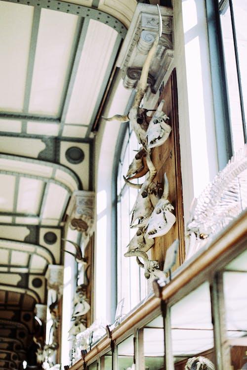 Animal Skulls in Museum