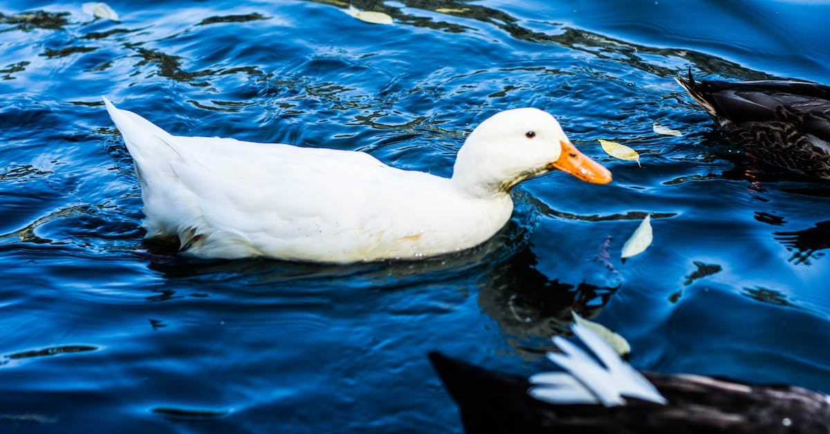 duck river buddhist personals To narrow your search with photos only, please signup free in 10 seconds the above 100% free dating personal ads show only partial results if you are searching for men seeking women and looking to hookup in nashville, sign up today.