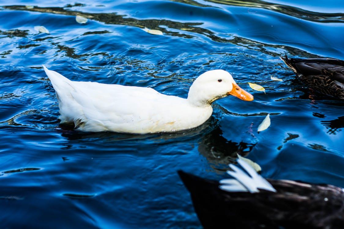 動物, 水, 水泳