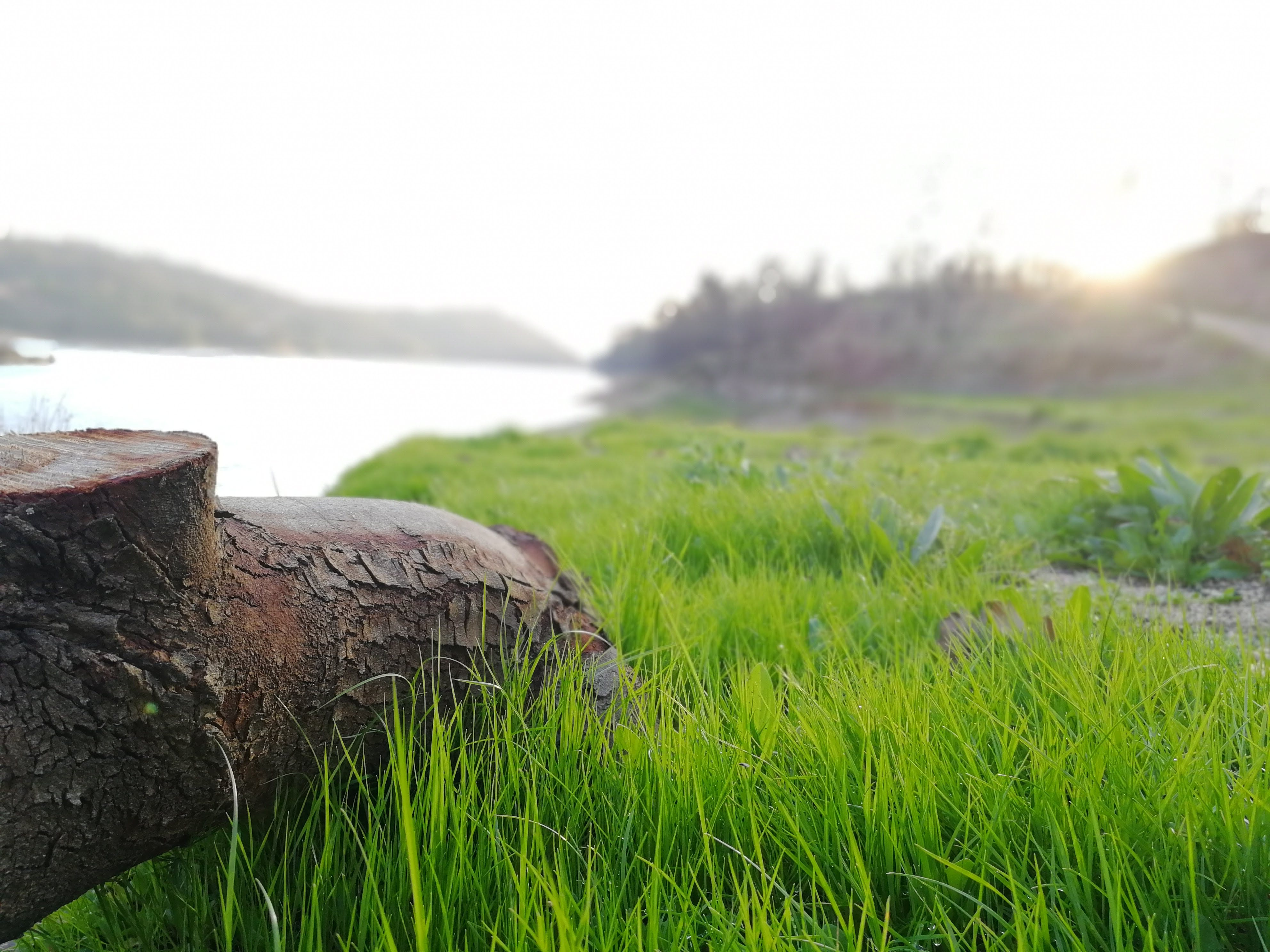 Selective Focus Photography of Brown Tree Trunk Near Green Grass Field