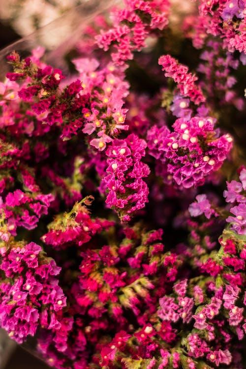 Immagine gratuita di colorato, colore, fiori, impianto
