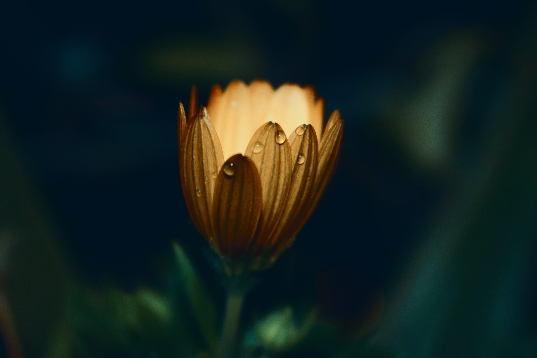 Yellow Daisy Flower in Closeup Photo