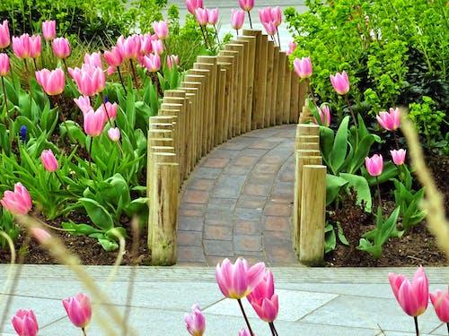 ahşap, Bahçe, bitki örtüsü, bitkiler içeren Ücretsiz stok fotoğraf
