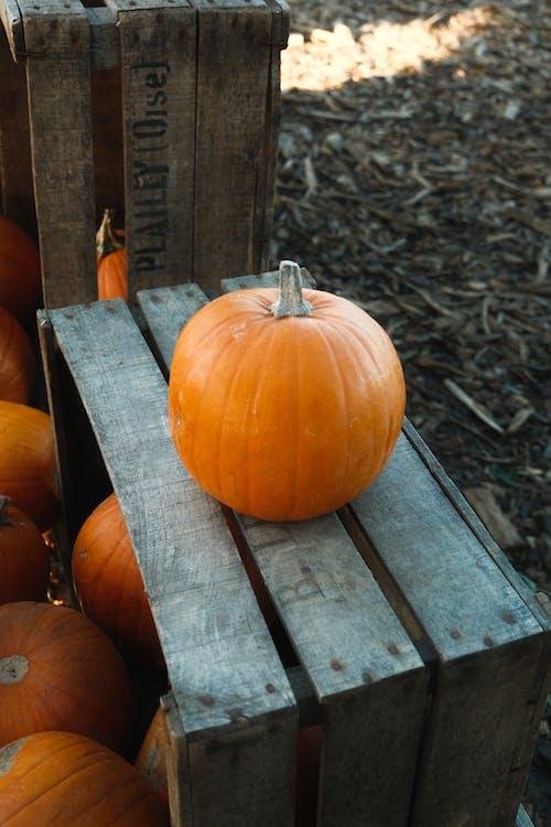 Orange Pumpkin on Brown Wooden Bench
