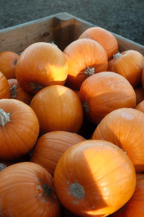 Freshly Harvested Pumpkins in Wooden Crate