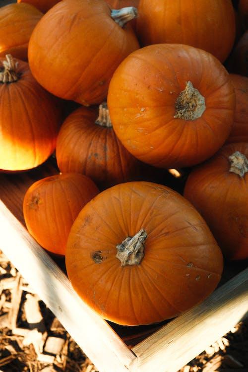 Orange Pumpkins on Brown Wooden Crate