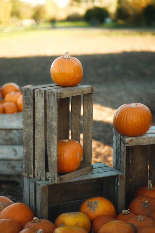 Orange Pumpkins on Brown Wooden Fence
