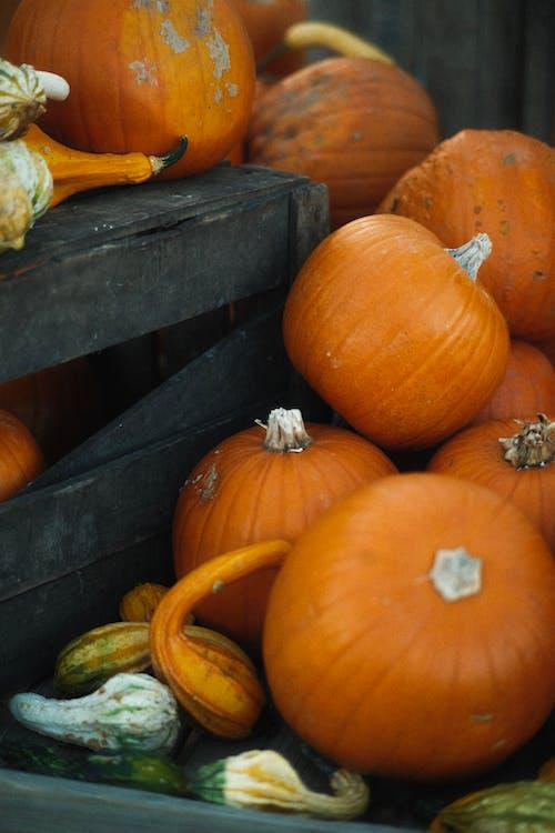 Heap of Freshly Harvested Pumpkins in Wooden Crate