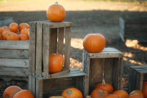 Freshly Harvested Pumpkins on Wooden Crates