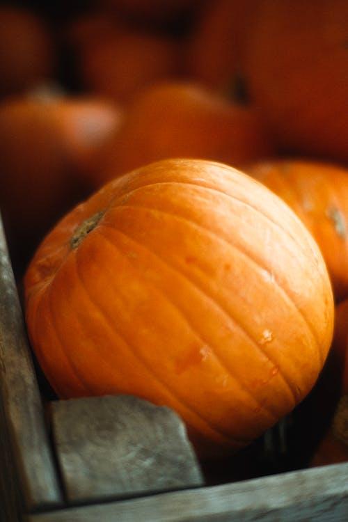 Orange Pumpkin on Gray Textile