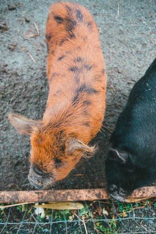 ヘア, 動物, 動物園の無料の写真素材