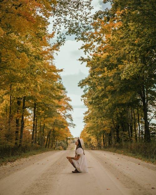 Бесплатное стоковое фото с взгляд вверх, Взрослый, дерево