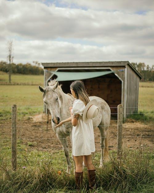 Ingyenes stockfotó ló, lófarm, lovak témában