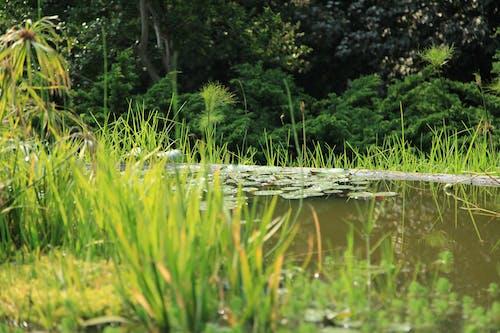 녹색, 물, 식물, 일의 무료 스톡 사진