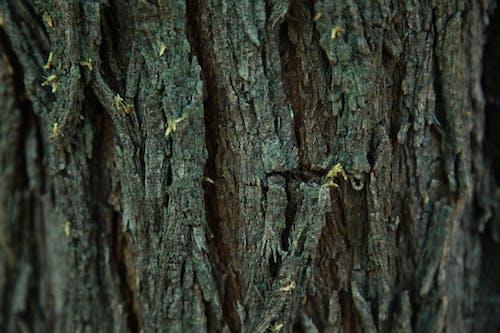 나무, 나무 질감, 메스 키트, 사막의 무료 스톡 사진