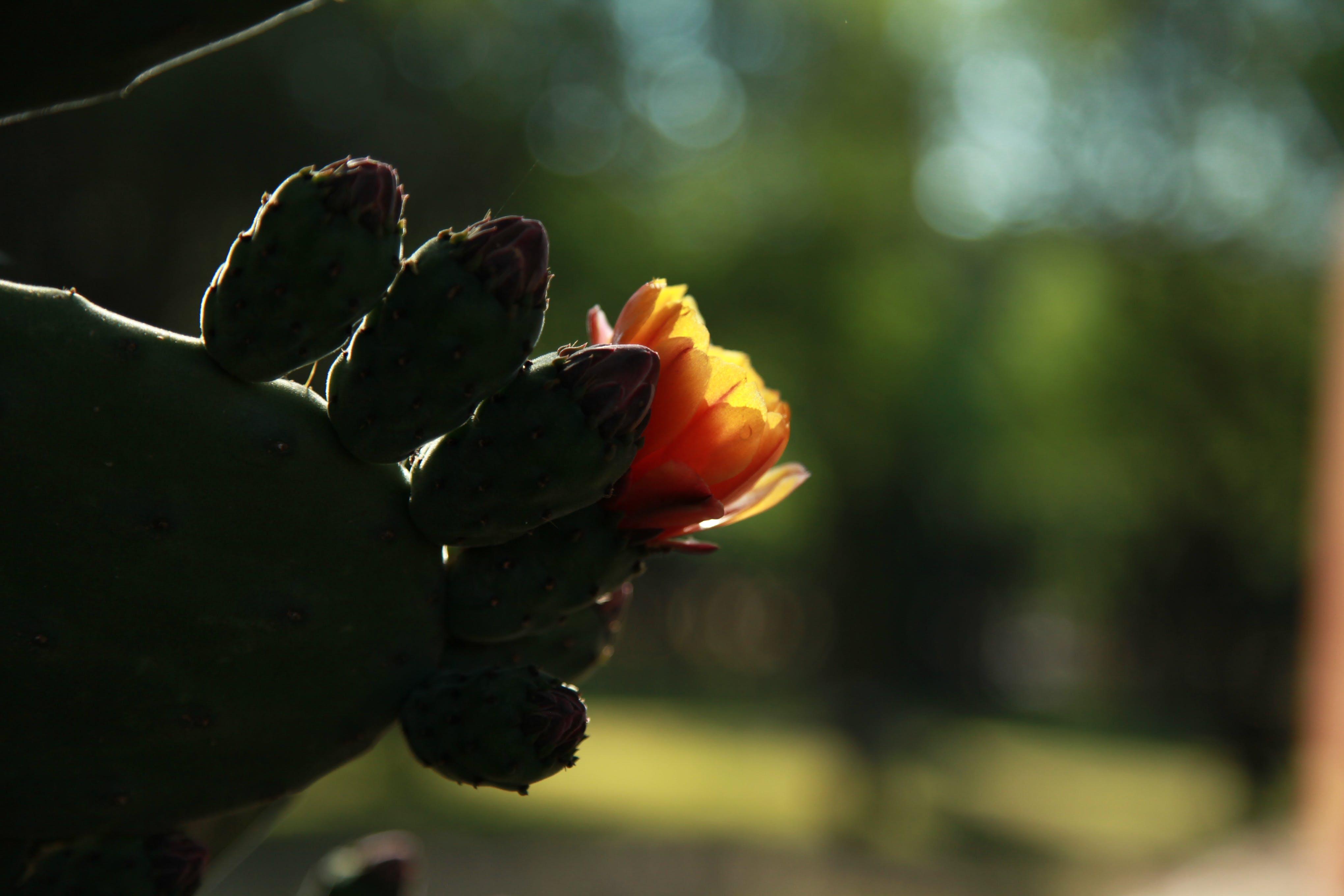 Ảnh lưu trữ miễn phí về ánh sáng, cây xương rồng, hoa, khô khan