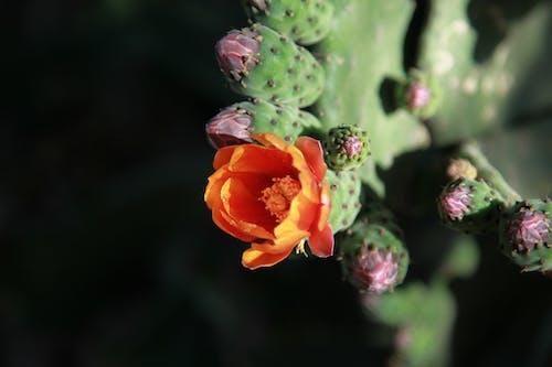 꽃, 메마른, 사막, 선인장의 무료 스톡 사진
