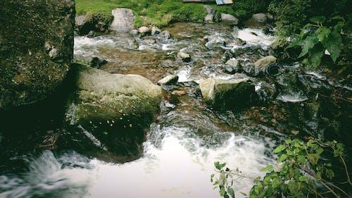 물, 바위, 초목의 무료 스톡 사진